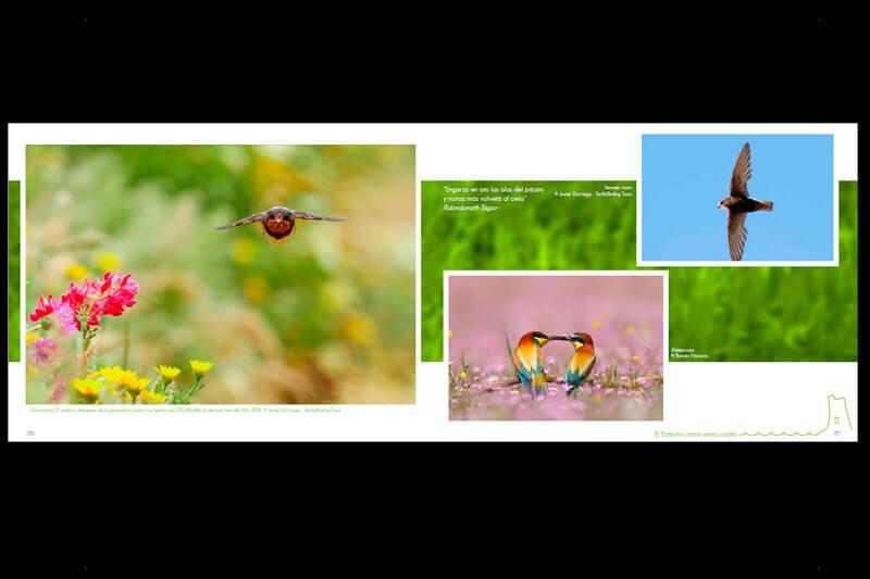 DISEÑO WEB EN SEVILLA: Libro Fotografía Frontera de Dos mundos
