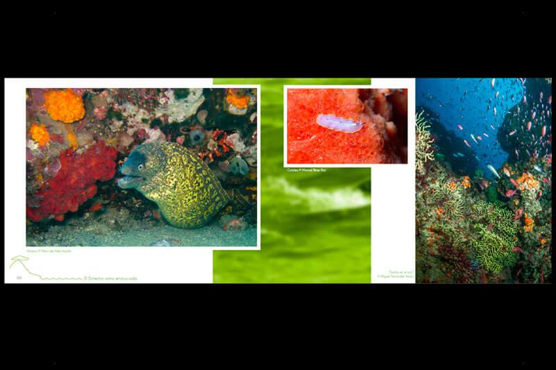 DISEÑO WEB EN SEVILLA: Libro Fotografía Frontera de Dos mundos 2